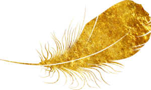 Gold feather - Lindén-Montes Photography